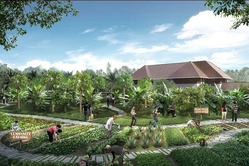"Artist's impressions of the running trails (above), which will snake around the hub, and a fruit orchard and community garden (right). The ""food forest"" and fruit orchard will have edible crops such as the cocoa tree and roselle plant."
