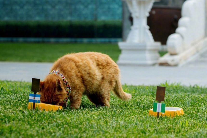 """The cat, named Baidian, which literally means """"white spot"""", won the hearts of tens of thousands of netizens after it made its first guess for the opening game of the World Cup on June 14."""