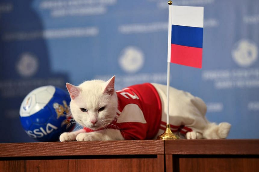 Feline fortune teller Achilles had been on the money with hosts Russia's victories over Saudi Arabia and Egypt, Iran's win against Morocco and Brazil's triumph over Costa Rica.