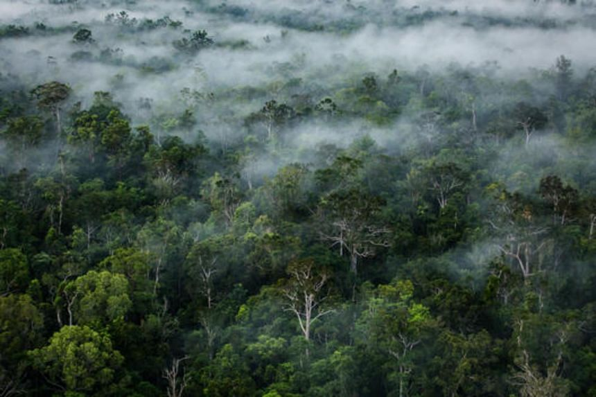 A primary forest in Papua.