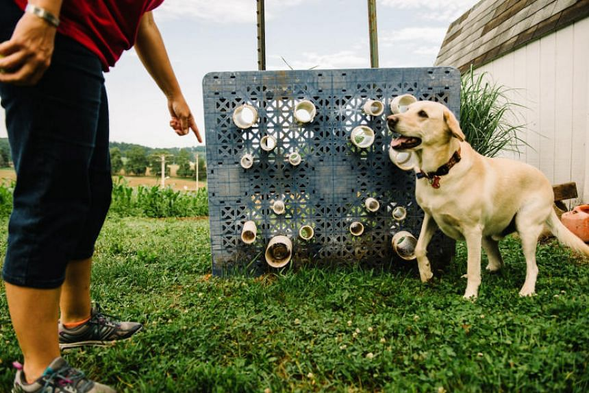Ms Cybil Preston, chief apiary inspector for the Maryland Department of Agriculture, is expanding her canine detection programme, training dogs to find traces of American foulbrood, a bacteria that can decimate beehives.