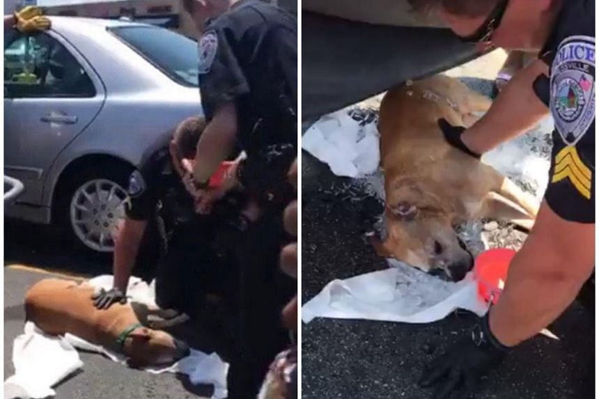 Police officers managed to break the car window, rescuing Sky, still breathing, from the back of the car. However, the seven-year-old dog eventually died.
