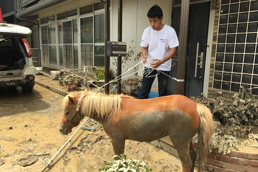 The miniature horse after being rescued from a rooftop, following recent flooding in the Mabicho area in Kurashiki, Okayama prefecture.