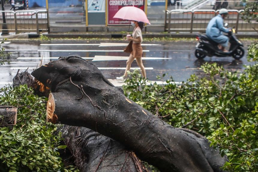 People walk past a fallen tree after it was knocked over by typhoon Maria in Taipei, Taiwan, on July 11, 2018.