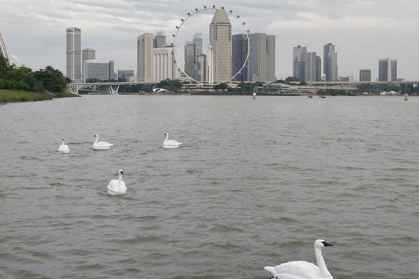The remote-controlled robot swans are equipped with cameras, probes and sensors, and can be deployed to analyse water samples and take photos of events above the water.