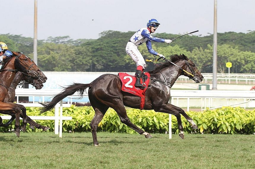 French jockey Olivier Placais standing up in his stirrups to celebrate Jupiter Gold's victory in yesterday's $1.15 million Group 1 Emirates Singapore Derby.