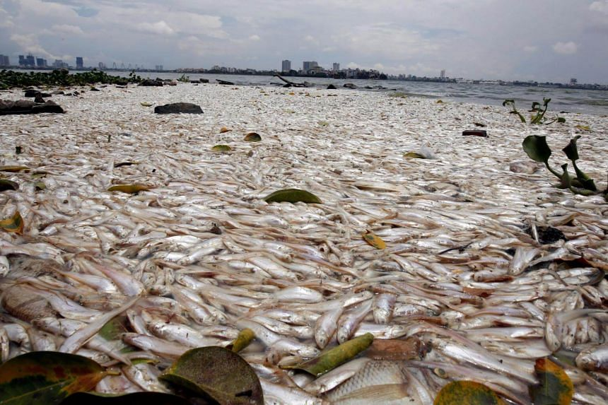 Dead fish floating on the polluted West Lake in Hanoi, Vietnam, on July 9, 2018.