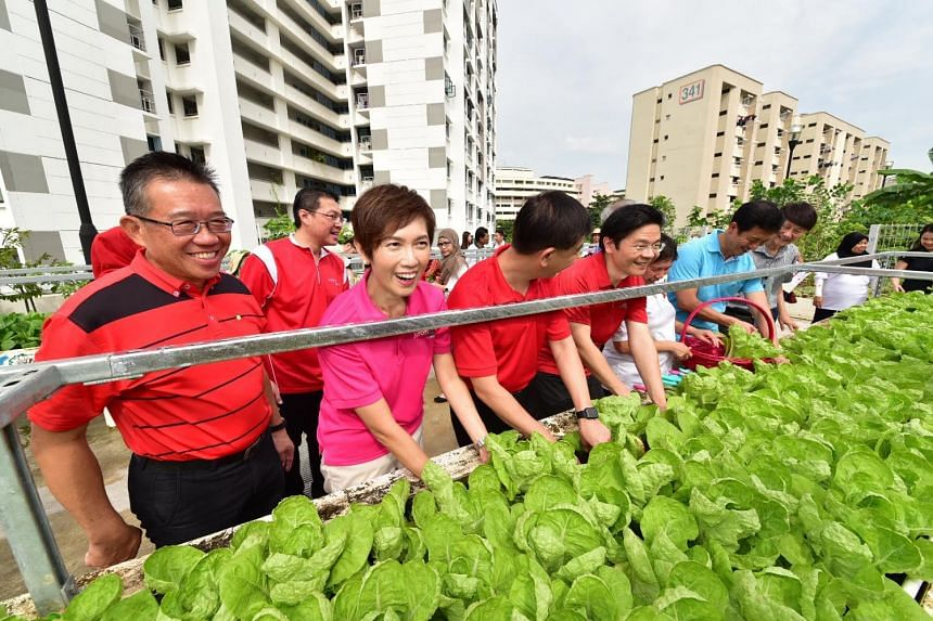 Ministers Josephine Teo, Ong Ye Kung and Lawrence Wong harvesting vegetable crops on a HDB rooftop garden in Jurong Central during their ministerial community visit.