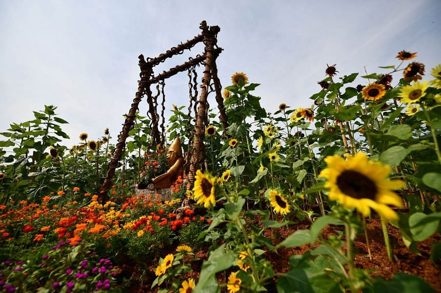 On display: The Vanda Valley, which features 120 types of plants and a manmade fountain; a Floral Windows to the World display by S.L.Y. Soh from Singapore; and the colourful Flower Field (above), with plants such as sunflowers.