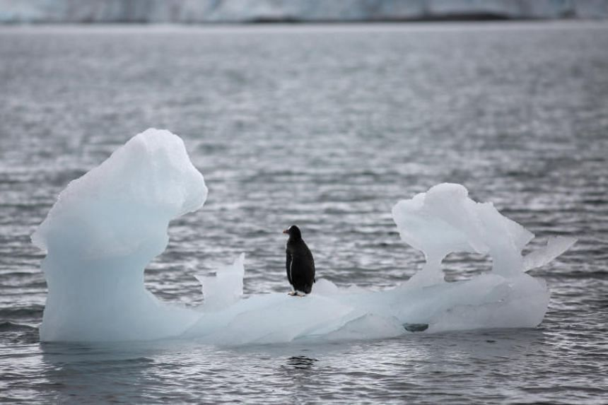 A penguin stands on an iceberg in Yankee Harbour, Antarctica, on Feb 18, 2018.