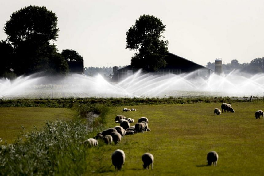 Sprinklers spray land with water in the area around Castricum, The Netherlands, on July 18, 2018.