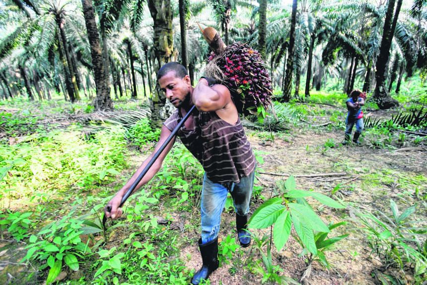 Workers collecting palm fruits to make palm oil, one of Malaysia's biggest exports. Trade has underpinned Malaysia's expansion since last year, helping to push up the growth rate to 5.9 per cent in 2017.