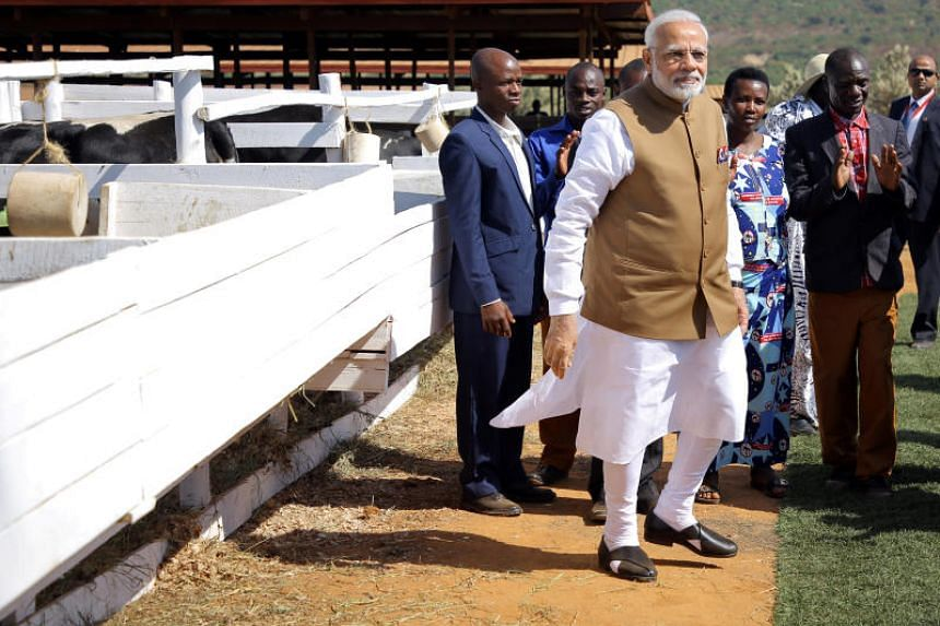"""India Prime Minister Narendra Modi gifted 200 cows to villagers who do not yet own one, as part of the Rwandan Government's Girinka """"may you have a cow"""" Programme, in Rwanda, on July 24, 2018."""