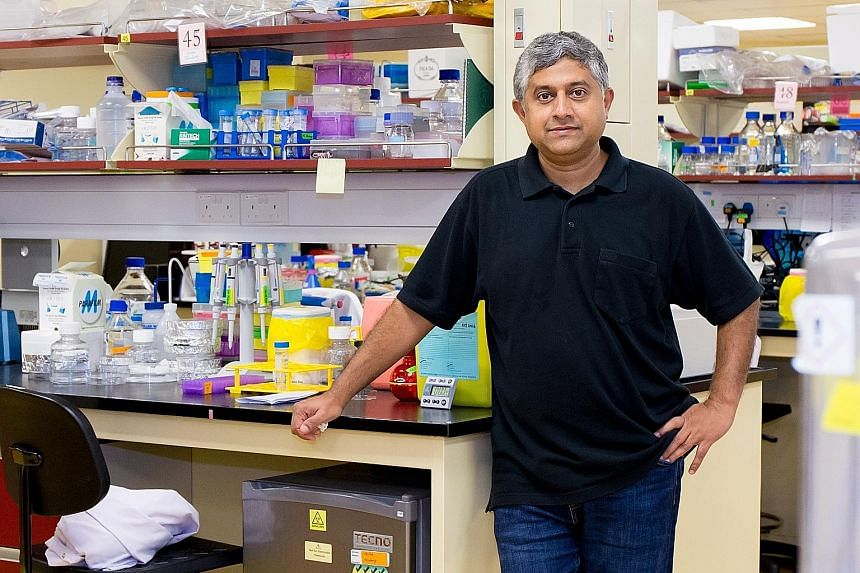 The method developed by Professor G.V. Shivashankar and his team lowers the risk of stem cells going awry when they are used to treat patients.