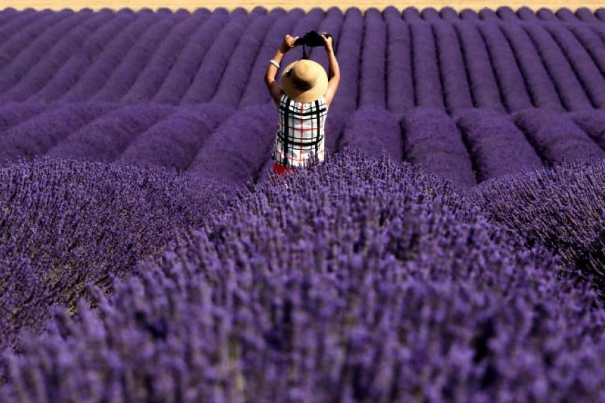 A Chinese tourist takes a picture in a lavender field in Valensole, France, on July 13, 2018.