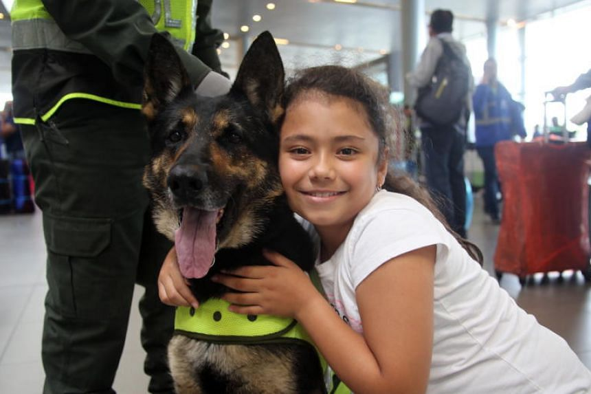 A handout photo made available by Colombian anti-narcotics police shows German Sheperd police dog, Sombra, 6, at the International airport El Dorado, in Bogota, Colombia, 26 July 2018. The Clan del Golfo offered a reward of US$70,000 for the head of