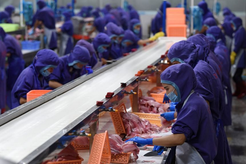 Workers process tilapia fish fillets at a workshop in Wenchang, Hainan province, China.