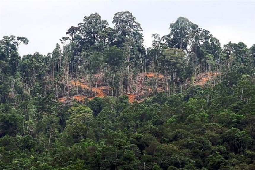 Over 40,000 logs, worth millions of ringgit in taxes alone, were seized from commercial forests and forest reserves in Tongod, Sandakan, Ranau and Kalabakan between July 5 and 14.