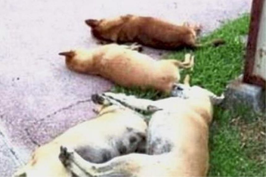 Some of the stray dogs that were poisoned at Elmina Garden, U16 Shah Alam.