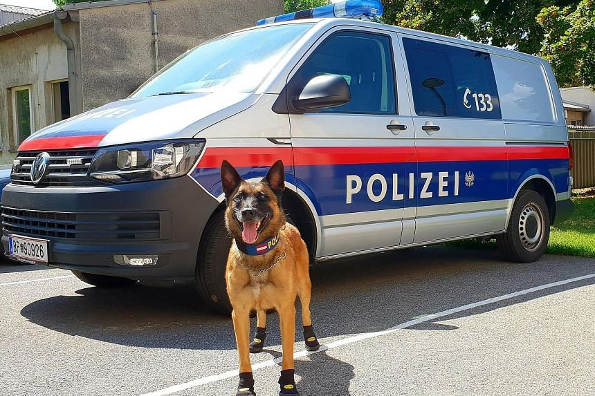 In Vienna, police dogs due to patrol a beach volleyball tournament were fitted with special shoes. Police said that even if temperatures were not excruciatingly hot, reaching just 34 deg C yesterday, the dogs would have to spend hours walking on surf
