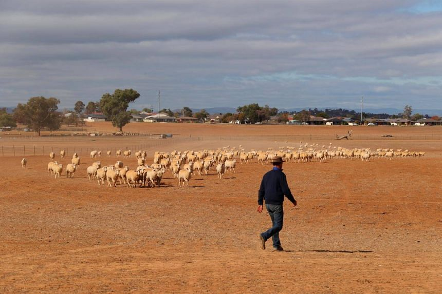 A drought-effected paddock on a property located on the outskirts of Tamworth, in north-west New South Wales in Australia, on June 2, 2018.