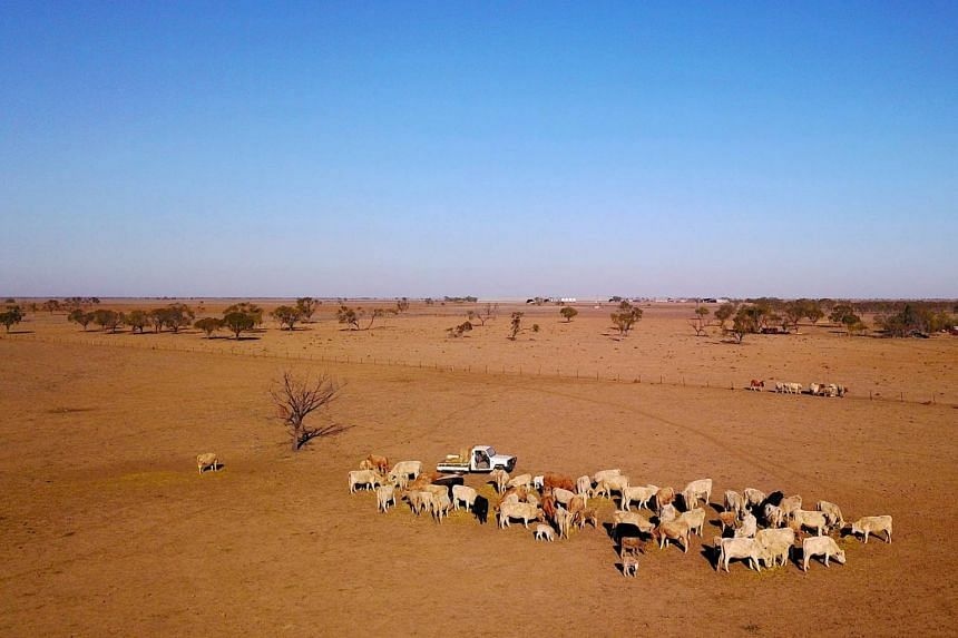 A farmer feeds the remaining cattle in Walgett, New South Wales, Australia, on July 20, 2018.
