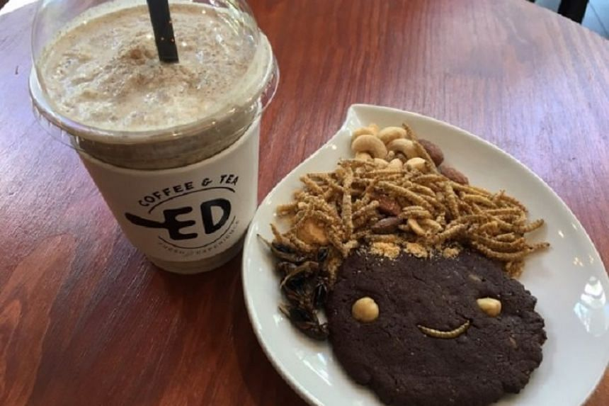 Mealworm smoothie (left), dried crickets, mealworm cookie and mealworm chips.