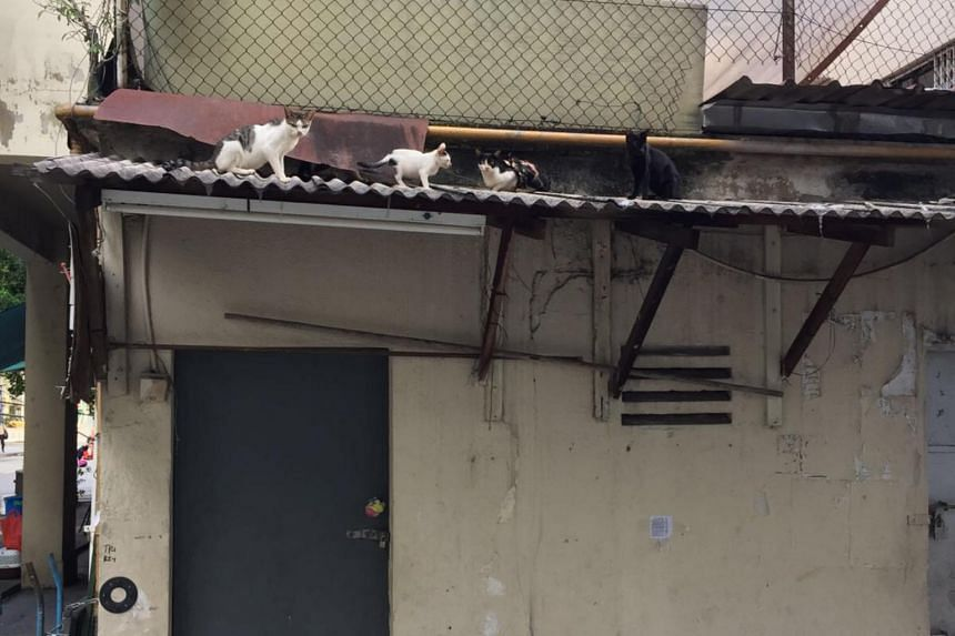 Independent cat rescuer Constance Loh said she was alerted by a cat feeder in the area that there were about a dozen cats on the roof of the Flanders Square shophouse.