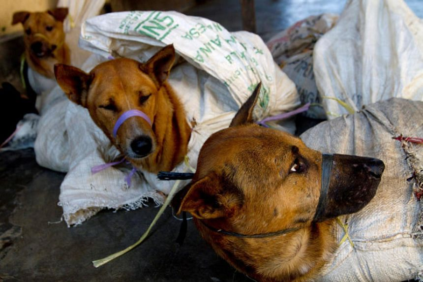 A file photo taken on May 29, 2011, shows dogs bound in sacks before their slaughter in Bantul, Indonesia.