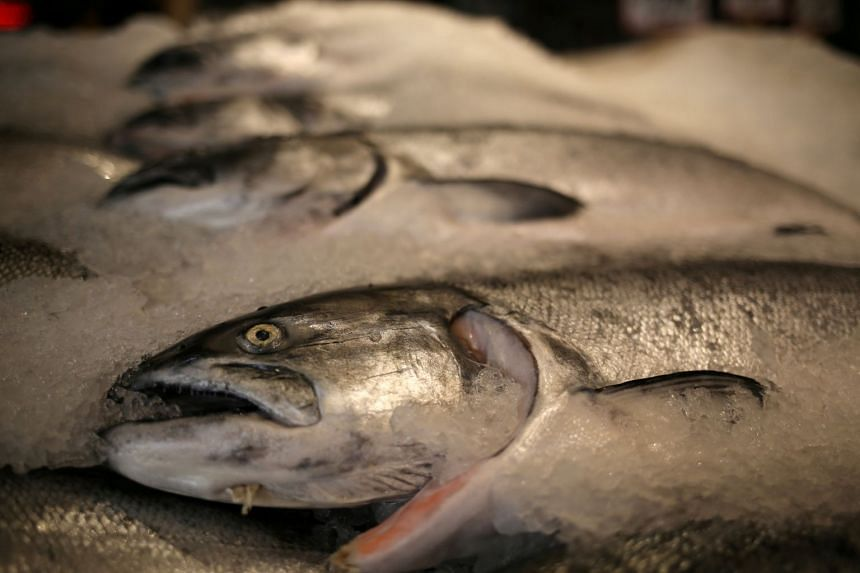 File photo showing Alaskan King salmon encased in ice on a seafood counter at Pike Place Market in Seattle, Washington, on Feb 10, 2017.