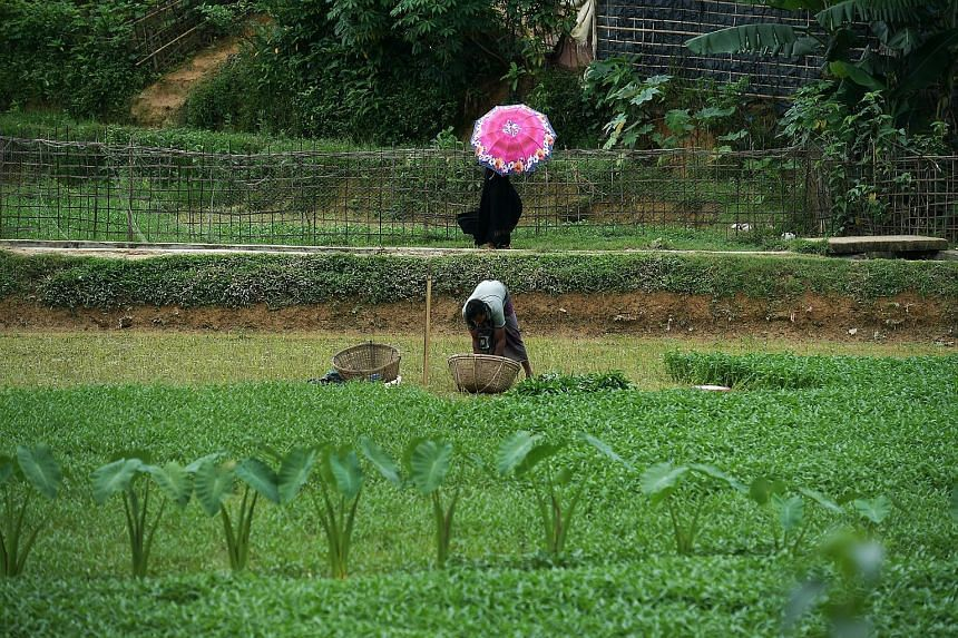 A woman dressed in a burqa walking past a man tending crops in the Kutupalong megacamp. More than 19,000 women from the camps have received counselling in connection with violence, usually from the men in their family.