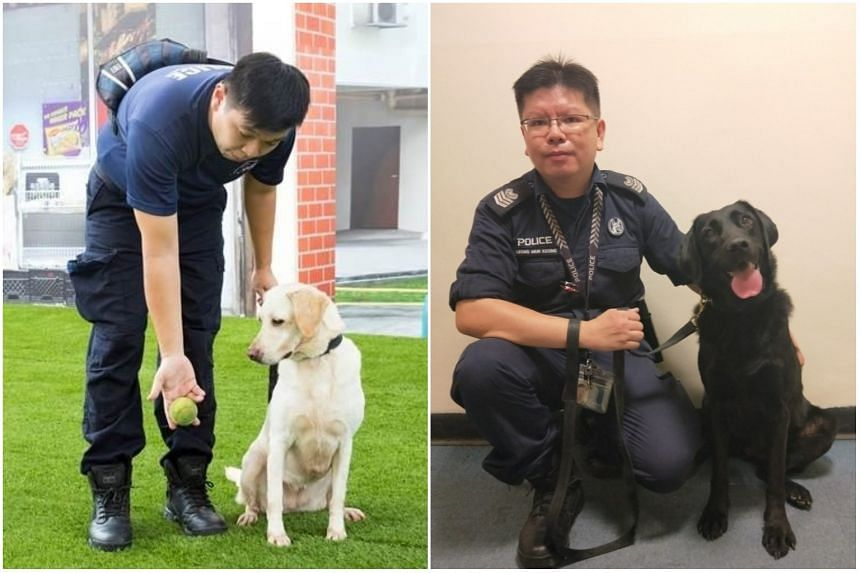 Staff Sergeant Daniel Tan with his dog Xelia (left) and Senior Staff Sergeant Leong Mun Keong with his dog Sniper.