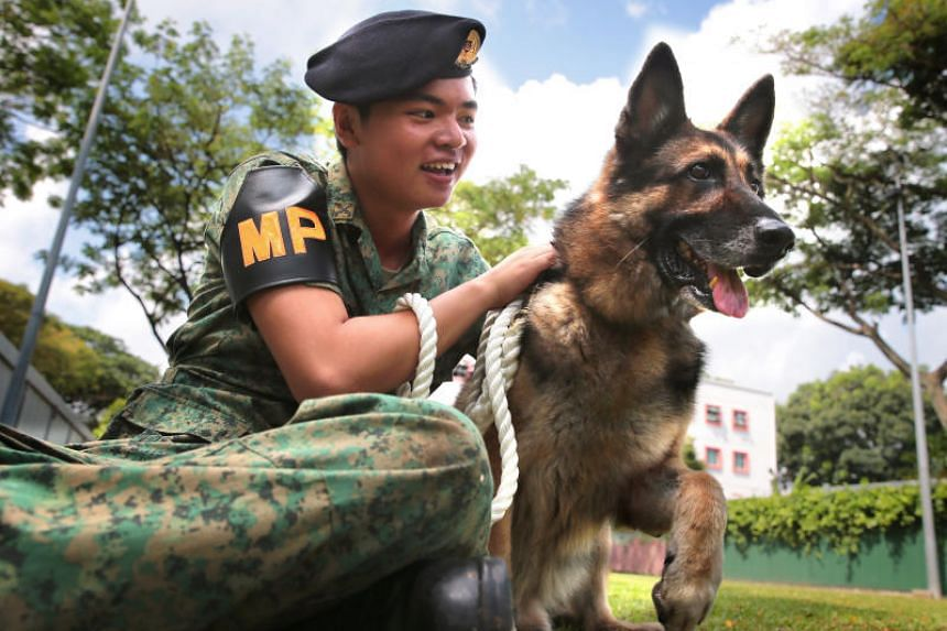 The public will be able to adopt retired dogs from the Singapore Police Force and Singapore Civil Defence Force K-9 units and the SAF Military Working Dog Unit.