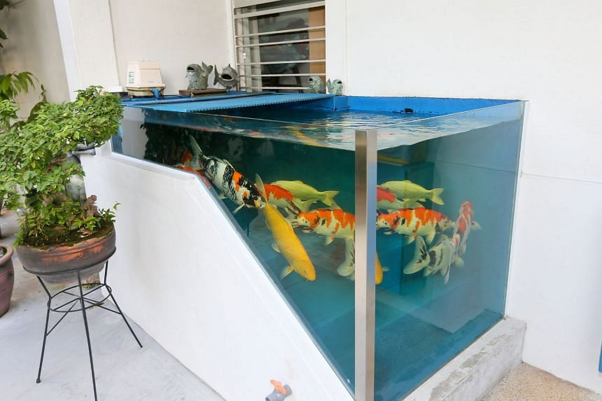 The clear blue tank, with its glass walls sealed to the concrete of the steps and wall, is located on the ground floor of Block 415 in Tampines Street 41.