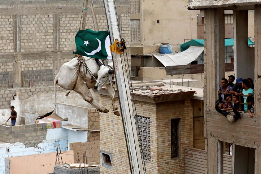 A sacrificial cow is lowered from a rooftop by crane, ahead of the Eid al-Adha festival in Karachi, Pakistan, on Aug 12, 2018.