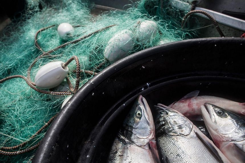 """China's major rainbow trout producers announced a new standard to allow the fish to bear the """"salmon"""" label."""