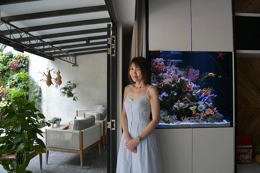 Mr Emilio Jr Butragueno (above) has a fish tank that doubles as a coffee table and it houses small fish (above left) for easy maintenance. Housewife Melissa Lim's square saltwater aquarium (left) has more than 60 types of coral and 20 species of fish