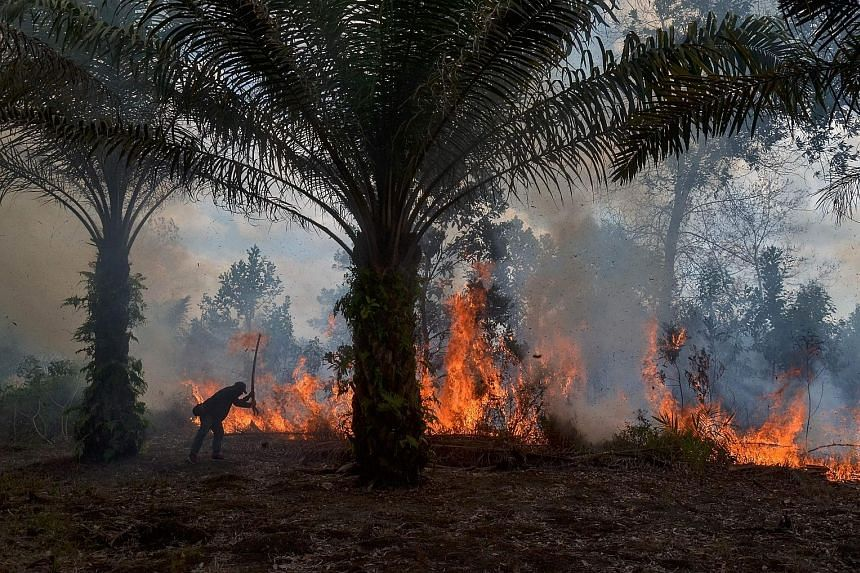 A man trying to extinguish a fire at an oil palm plantation in Pekanbaru on Tuesday. Most of the land fires were started by locals using the slash-and-burn method to clear their land.