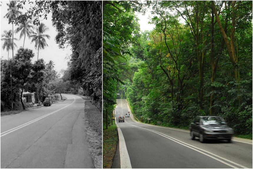 (From left) The Old Punggol Road in 1982 (Lee Kip Lin and National Library Board, Singapore 2009), and its current view.