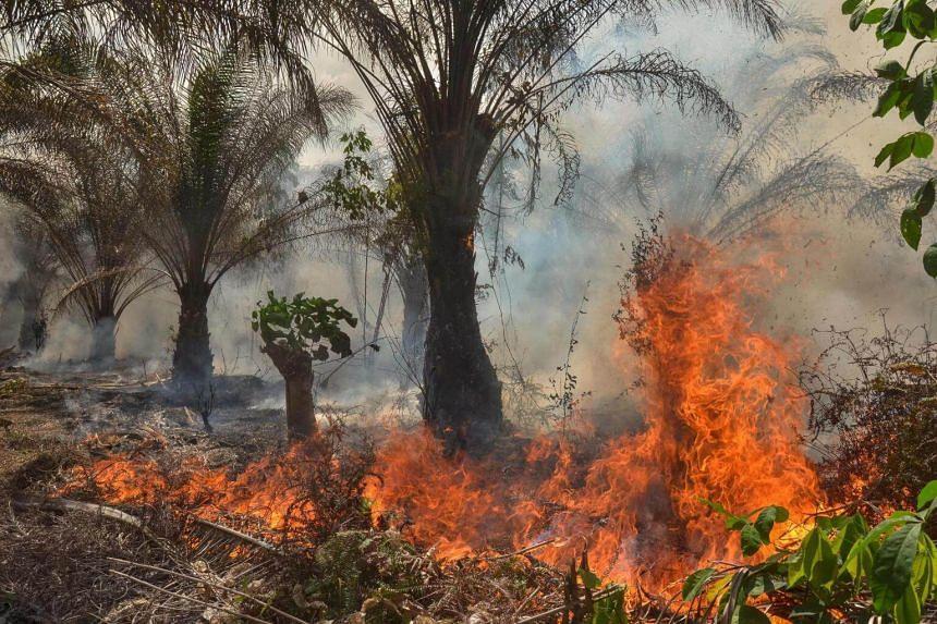 A fire at an oil palm plantation in Pekanbaru, Riau province, Sumatra, on Aug 14, 2018.