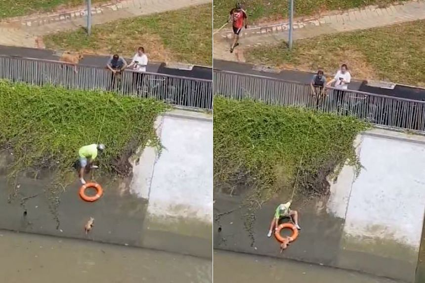 In a video of the rescue, three passers-by are seen helping to haul in the cat from the rushing current. A fourth person is seen later in the video with a long pole in his hand.