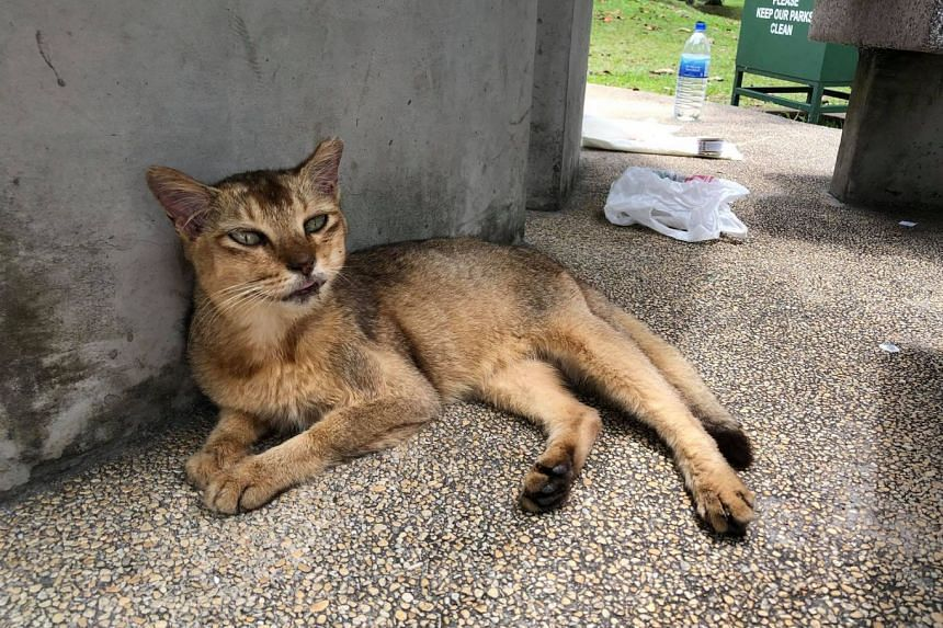 A cat, said to be one of the 18 community cats removed from St John's Island, found abandoned near Sembawang beach on Sept 3, 2018.