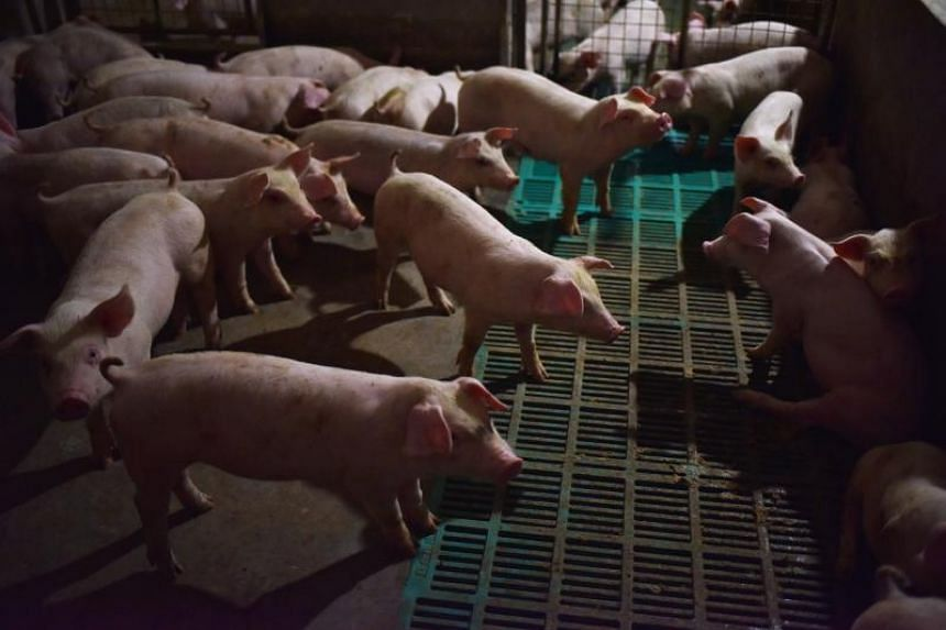 Tens of thousands of hogs have been culled to control outbreaks in China, which accounts for more than half the planet's pigs.