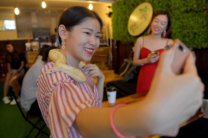 A customer taking a selfie with a python around her neck at the Reptile Cafe in Phnom Penh, on Aug 18, 2018.