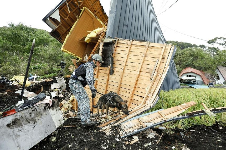 A Japanese Air Self-Defence Force's rescue dog searching yesterday for missing people at a house destroyed by a large landslide caused by a powerful earthquake in Atsuma, Hokkaido. Twenty-four people were still missing after Thursday's pre-dawn magni
