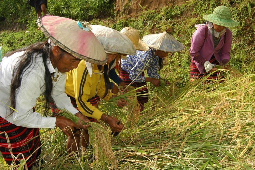 The Hudhud is chanted by the people in Ifugao, a province in the Philippines known for its rice terraces, during the sowing and harvesting of rice, and during funeral wakes and rituals.