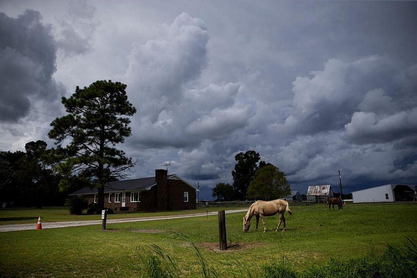 Horses on a farm North Carolina, where the powerful Hurricane Florence is set to descend upon.