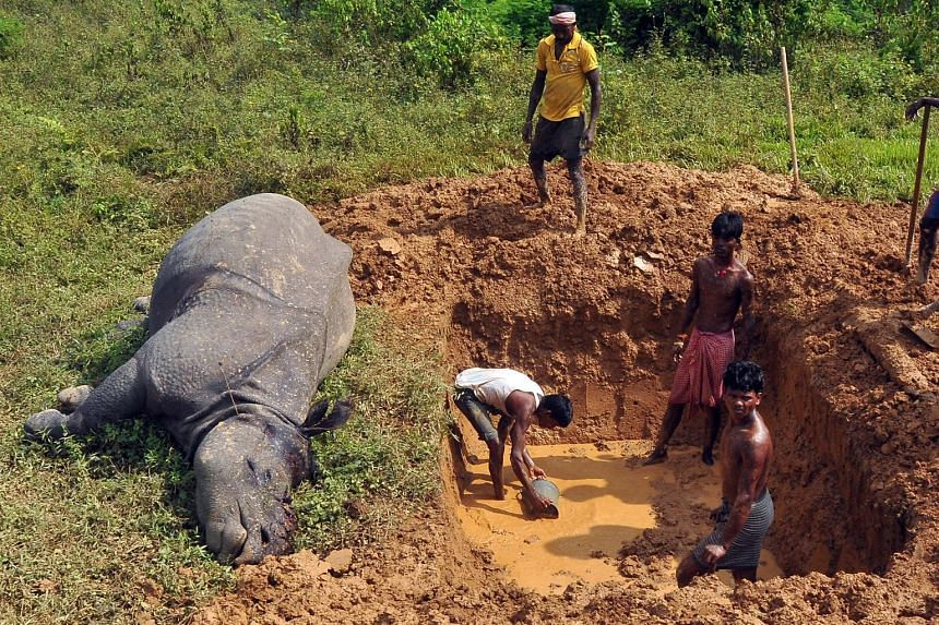 A rhinoceros killed at a tea estate near Kaziranga area in Assam. The Indian state is home to the world's largest population of the endangered one-horned rhinoceros.