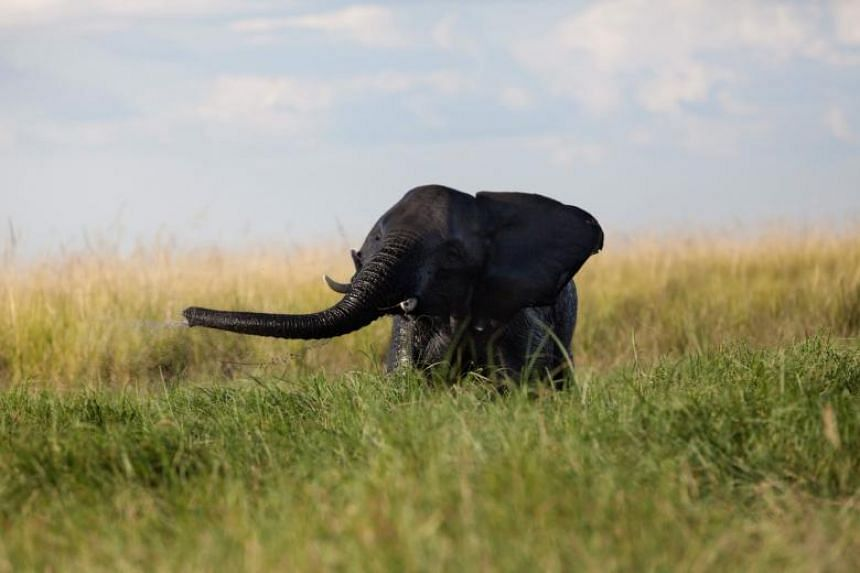 Africa is at the epicentre of global poaching and trafficking of many species, with elephants coveted for their ivory tusks and rhinos sought for their horns which are used in traditional Asian medicine.
