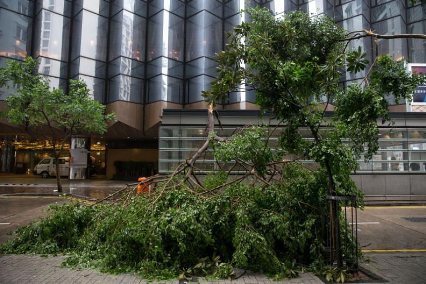 A tree brought down by Typhoon Mangkhut lies in the middle of a road in Hong Kong on Sept 16, 2018.